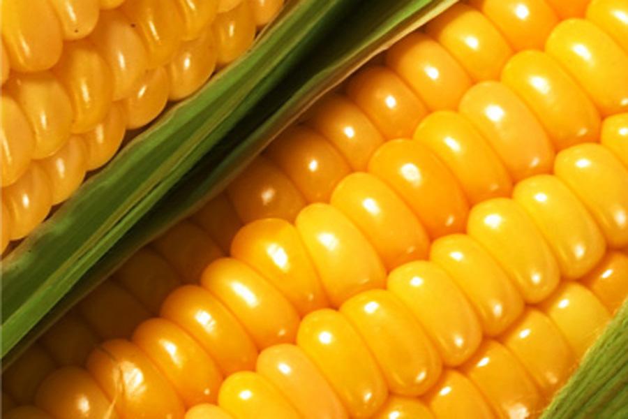 Основные виды кукурузы